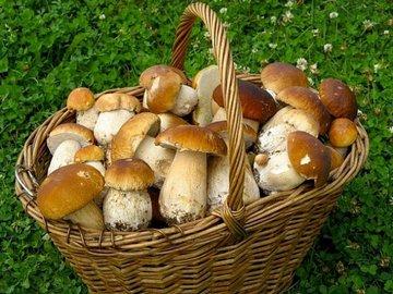 Жительница Башкирии лишилась 15 тысяч рублей из-за грибов