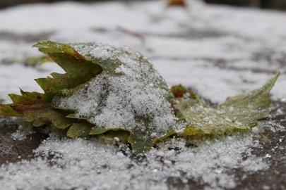 Граждан  Башкирии предупреждают озаморозках сегодня ночью