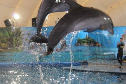 Дельфины погибают из-за контактов слюдьми— Ученые