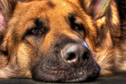 Русские кинологи обучили собак распознавать рак