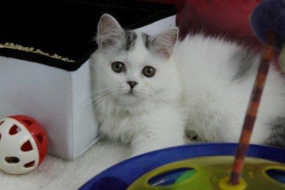 ВУфе котенок погибает  сголоду впроданной квартире