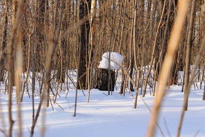 Метеорологи рассказали, когда в Башкирии установится снежный покров