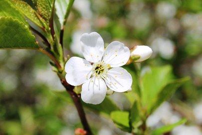 ВКировском районе Уфы возникла вишневая Аллея памяти