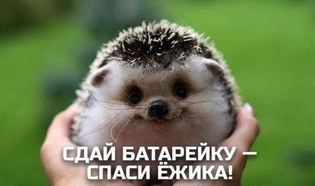 Уфимские школы присоединились кВсероссийской акции «Ёжики должны жить!»