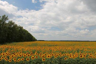 Природе Башкирии причинен вред на150 млн руб.