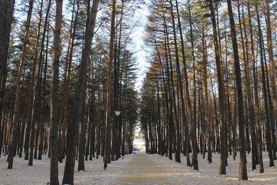 ВБашкирии проверяют законность заготовок хвойных деревьев: Проходит операция «Ель-2016»