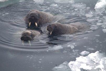 Вэти выходные уфимские моржи вновь устроят суточный заплыв
