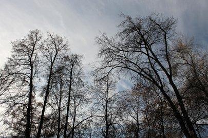 ВБашкирии прогнозируется усиление ветра