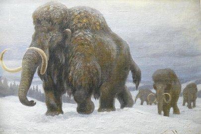 В России появилась лаборатория по клонированию мамонтов